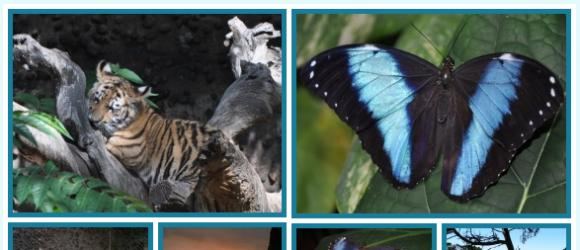Drupal – Collage Formatter